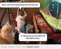 TV 3D của mèo :D
