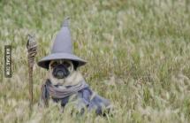 Nhìn gì, chưa thấy phù thủy chó bao giờ àh :))