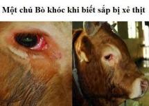 Động vật cũng biết đau, biết sợ :(