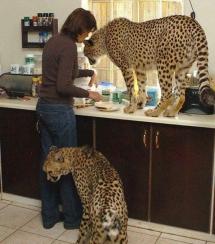 Nhà có điều kiện, nuôi mấy con mèo làm cảnh =))