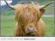 Con bò thời trang nhất tại 9bua.com là đây