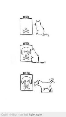 Bé mèo rất ít khi troll... nhưng một khi đã troll thì.. :D