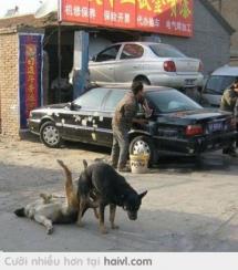 Chó cũng phải bật cười khi con người không xếp hình được dư nó :))