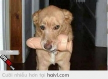 Gấu em nó cứ cãi là khúc xương nó mua cho chó gặm